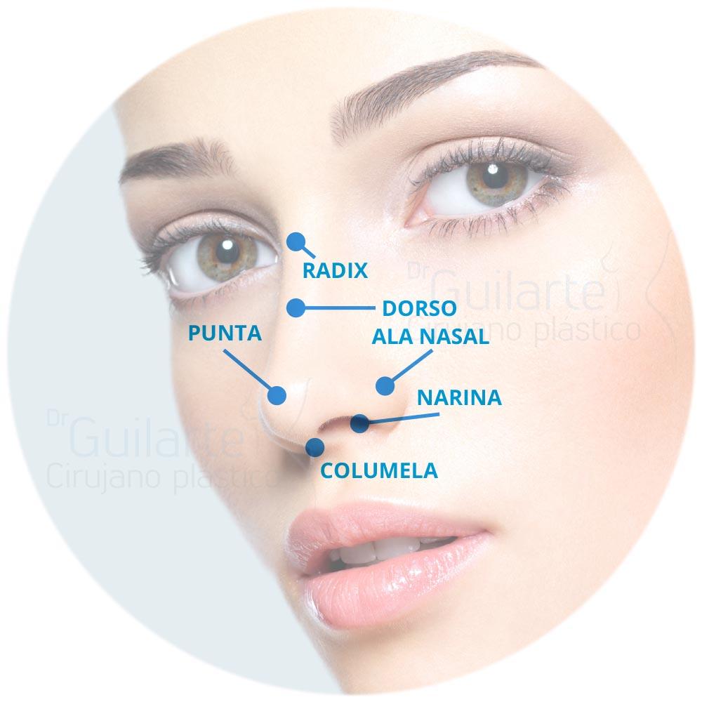 Análisis de la nariz
