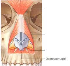 depresor-punta-nasal-rinoplastia